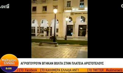Αγριογούρουνο βγήκε… βόλτα στην πλατεία Αριστοτέλους! (vid)