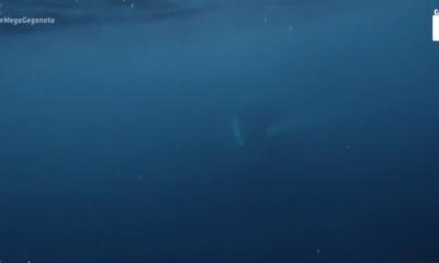 Φάλαινα κατάπιε & «έφτυσε» ψαρά (vid)